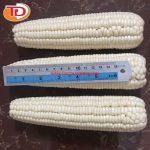 Bắp nếp trắng đông lạnh (Frozen White Corn) 04