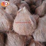 Dừa đông lạnh (Frozen Coconut Meat) 04