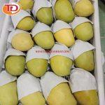 Xoài đông lạnh (Frozen Mango) 04