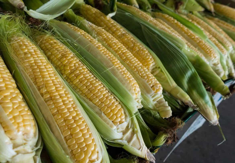 Giá bắp chuyển biến tích cực những tháng đầu năm 2020