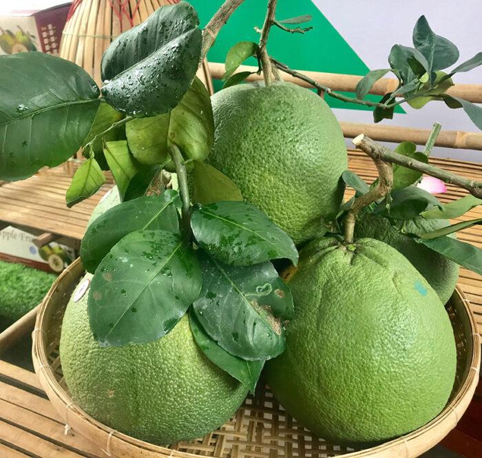 Việt Nam là thị trường cung cấp trái bưởi lớn thứ 25 cho EU 27.