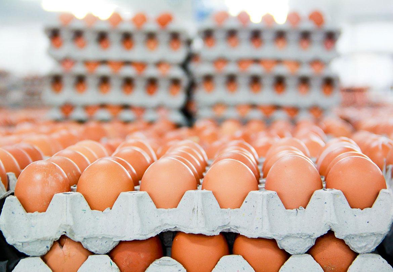Hạn ngạch thuế quan nhập khẩu muối trứng gà