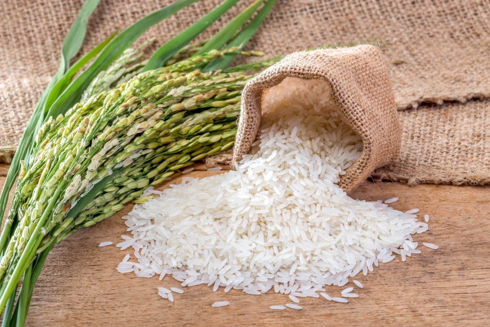 Giá gạo xuất khẩu Việt Nam duy trì trên 500 USD/tấn trong tuần qua