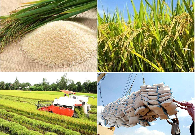 Xuất khẩu gạo tháng 3/2021 sôi động trở lại