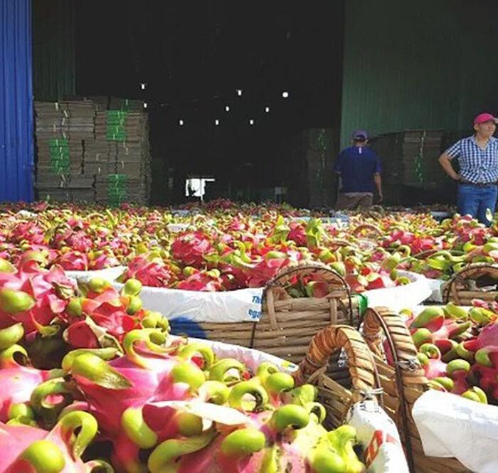 Doanh nghiệp cõng thêm nhiều chi phí khi xuất khẩu qua cửa khẩu Tân Thanh vì quy định mới của Trung Quốc